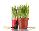 Zelené trávě ve dvou květináč izolovaných na bílém — Stock fotografie