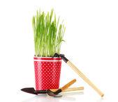 白で隔離され、植木鉢に緑の草 — ストック写真