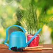 Green grass in a flowerpot on green background - Photo