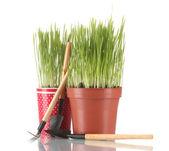 Grünes gras in zwei blumentopf isoliert auf weiss — Stockfoto
