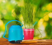 Green grass in a flowerpot on green background — Stock Photo