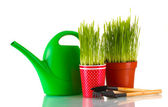 Green grass in two flowerpot isolated on white — Foto de Stock