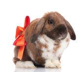 Slokörad kanin med röd rosett isolerad på vit — Stockfoto