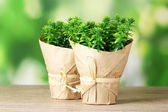 Thyme herb plants in pot with beautiful paper decor on wooden table on green background — Stock Photo
