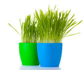 Beautiful grass in a flowerpots isolated on white — Stock Photo