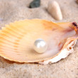 Sea shell with pearl on sand — Stock Photo