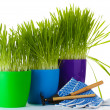 Beautiful grass in a flowerpots, garden tools and gloves isolated on white — Stok fotoğraf