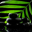 Spa stones with drops and green palm leaf on black background — Stock Photo