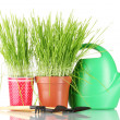 Foto Stock: Green grass in two flowerpot on blue background