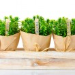 Thyme herb plants in pots with beautiful paper decor on wooden stand isolated on white — Stock Photo
