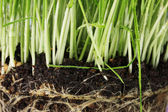 Green grass with the land closeup — Stock Photo