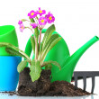 Beautiful purple primrose, soil, watering can and rake isolated on white - Stockfoto
