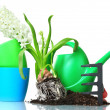 Beautiful hyacinth, soil, watering can and rake isolated on white - Foto Stock