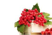 Czerwone jagody kalina w drewniane pudełko i wrzośca na białym tle — Zdjęcie stockowe