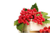 Red berries of viburnum in wooden box and briar isolated on white — Zdjęcie stockowe
