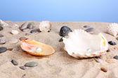 Conchiglie con perla sulla sabbia — Foto Stock