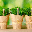 Thyme herb plants in pots with beautiful paper decor on wooden table on green background — Stock Photo #9775937