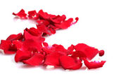 Beautiful petals of red roses isolated on white — Stock Photo