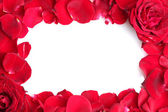Beautiful petals of red roses and roses isolated on white — Stock Photo