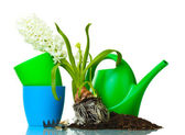 Beautiful hyacinth, soil and watering can isolated on white — Stock Photo