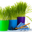 Beautiful grass in a flowerpots, garden tools and gloves isolated on white — Стоковая фотография