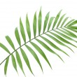 Beautiful green palm leaf isolated on white — Stock Photo