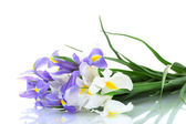 Beautiful bright irises isolated on white — Stock Photo