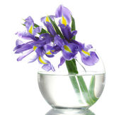 Beautiful bright irises in vase isolated on white — Foto Stock