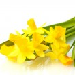 Beautiful yellow daffodils isolated on white — Stock Photo #9887951