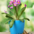Beautiful purple primrose in a flowerpot and garden tools on wooden table on green background — Stock Photo