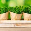 Thyme herb plants in pots with beautiful paper decor on wooden stand on green background — Stock Photo