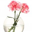 Beautiful carnations transparent vase isolated on white — Stock Photo #9949439