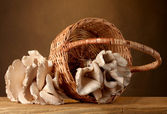 Oyster mushrooms in basket on wooden table on brown background — Stock Photo