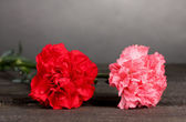 Two carnation on grey — Stock Photo