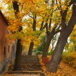 Stock Photo: Yellow autumn maple leaf alley