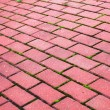 Garden stone path Brick Sidewalk — Stock Photo