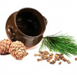 Pot, pine nuts, cones and pine branches on a white background — Stock Photo #8741656