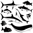 Fish vector — Stock Vector