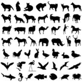 50 animal set — Stock Vector