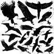 Stock Vector: Bird set