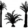 Palm tree vector — Stock Vector #8939031