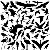 Bird vector — Stock Vector