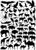 Collection of animal vector — Stock Vector