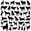 Stock Vector: Collection of dog