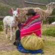 Peruvian woman — Stock Photo