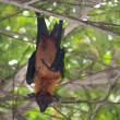 Bat in a tree — Stock Photo