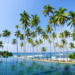Tropical palms — Stock Photo
