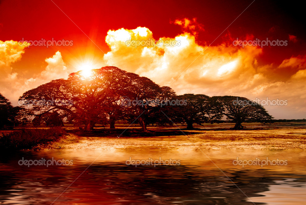 Fantasy sunset over acacia trees reflecting in water in Africa — Stock Photo #8552718