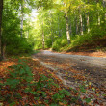 Rural autumn scenery — Stock Photo #9154197