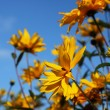 Yellow flowers — Stock Photo #9154471